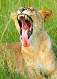 Safari Südafrika - Volksbank Lübbecker Land