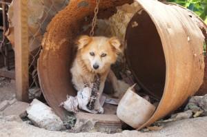 Straßenhunde traurig Volksbank Lübbecker Land
