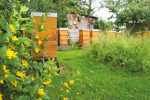 Volksbank Lübbecker Land 2020 Bienen